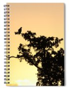 Osprey Sunset Spiral Notebook