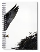 Osprey With Sushi Spiral Notebook
