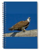 Osprey With Fish In Talons Spiral Notebook