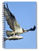 Osprey With Mullet Spiral Notebook