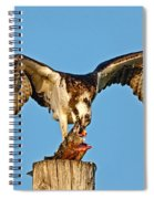 Osprey With Spotted Bass Spiral Notebook
