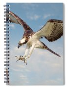Osprey With Talons Extended Spiral Notebook