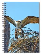 Ospreys Copulating In New Nest2 Spiral Notebook