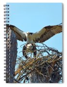 Ospreys Copulating In New Nest3 Spiral Notebook