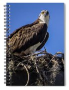 Ospreys In The Nest Spiral Notebook