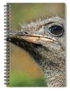 Ostrich 4 Spiral Notebook