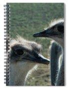 Ostrich Round-up Spiral Notebook