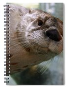 Otter Be Lookin' At You Kid Spiral Notebook