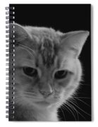 Our Lion In Black And White Spiral Notebook