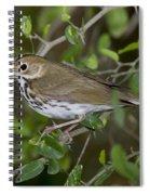 Ovenbird Spiral Notebook