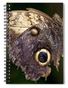 Owl Butterfly Spiral Notebook
