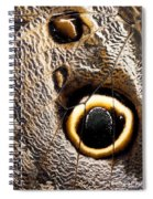 Owl Butterfly Wing Spiral Notebook