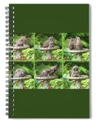 Owls Do Take Baths Spiral Notebook