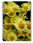 Ox Eye Daisies Spiral Notebook