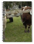 Oxen Spiral Notebook