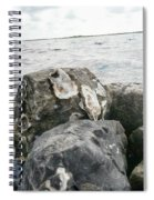 Oysters On The Rocks Spiral Notebook