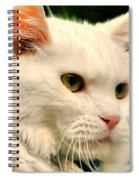 P C - Perfect Cat Spiral Notebook