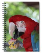 P Is For Parrot Spiral Notebook