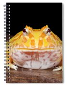 Pac Man Frog Ceratophrys On A Rock Spiral Notebook