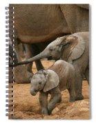 Pachyderm Pals Spiral Notebook
