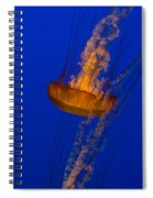 Pacific Sea Nettles In A Row Spiral Notebook