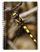 Pacific Spiketail Dragonfly On Mt Tamalpais 2 Spiral Notebook