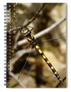 Pacific Spiketail Dragonfly On Mt Tamalpais Spiral Notebook