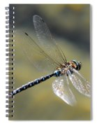Paddletail Darner In Flight Spiral Notebook