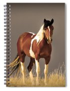 Paint Filly Wild Mustang Sepia Sky Spiral Notebook