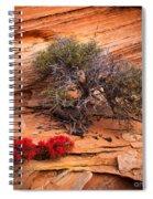 Paintbrush And Juniper Spiral Notebook