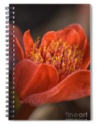 Paintbrush Lily Spiral Notebook