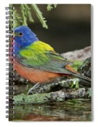 Painted Bunting Drinking Spiral Notebook