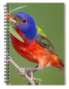 Painted Bunting Eating Granjeno Berry Spiral Notebook