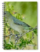 Painted Bunting Hen Spiral Notebook