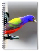 Painted Bunting - Img 9755-004 Spiral Notebook