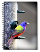 Painted Bunting - Img_9756-004 Spiral Notebook