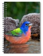 Painted Bunting Passerina Ciris In Water Spiral Notebook