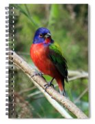 Painted Bunting Photo Spiral Notebook
