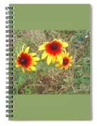 Painted Daisies Spiral Notebook