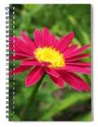 Painted Daisy Spiral Notebook