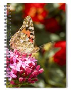 Painted Lady Butterfly Spiral Notebook