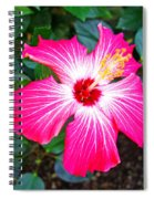 'painted Lady' Hibiscus Spiral Notebook