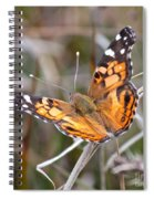 Painted Lady Square Spiral Notebook
