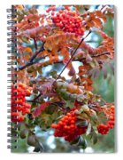 Painted Mountain Ash Berries Spiral Notebook