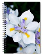 Painted Petals Spiral Notebook