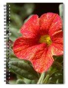 Painted Petals Spiral Notebook