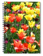 Painted Sunlit Tulips Spiral Notebook
