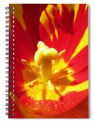 Painted Tulip Spiral Notebook