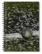 Painted Turtle Sleeping Like A Log Spiral Notebook