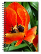 Painterly Red Tulips Spiral Notebook